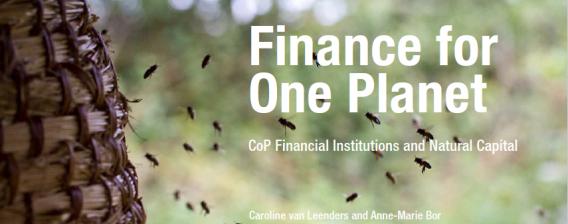 Praktijkervaringen Financial Institutions & Natural Capital opgetekend in publicatie
