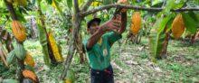 ABN AMRO en Root Capital gaan partnership aan om kleine boeren te financieren