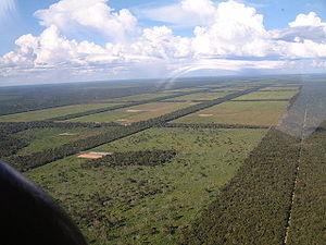 Natuurbeschermers en bankiers om tafel om ontbossing tegen te gaan