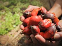 Rabobank reageert op palmolie-problematiek en duurzaamheidsbeleid