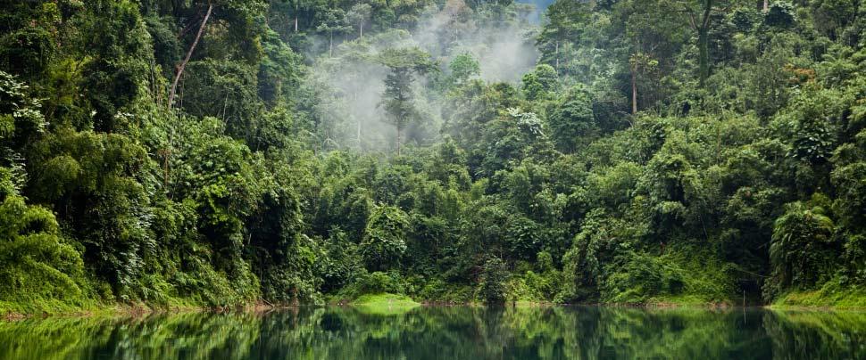 Aanpak en beleid ABN AMRO voor bedrijven in de palmoliesector