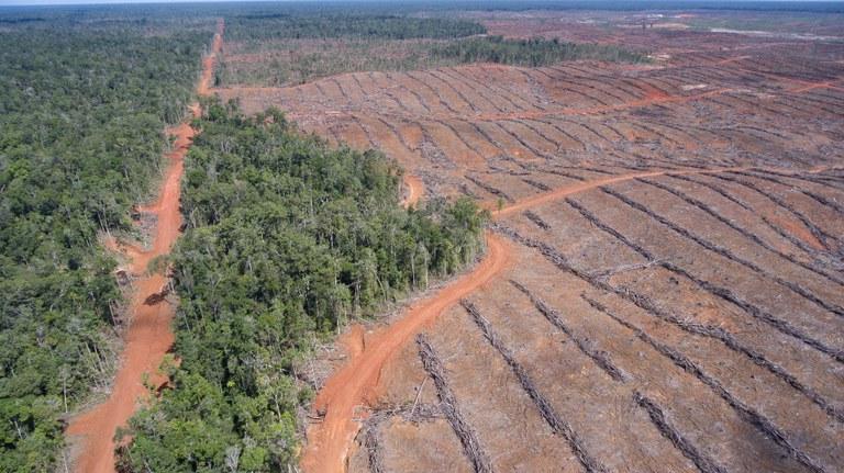 Milieudefensie: 'Nederlandse banken financieren landroof en ontbossing'