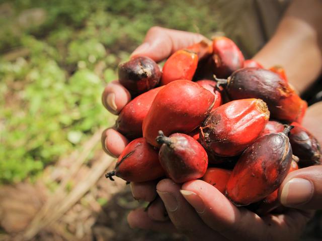 Verzekeraar Aegon stopt met investeringen in palmolie