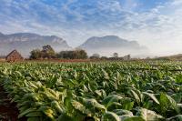 Pensioenfonds PostNL belegt niet langer in tabak