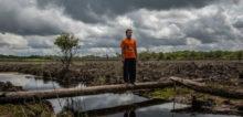 Milieudefensie: 'Nederlandse banken laten consumenten onbewust beleggen in foute palmoliebedrijven'