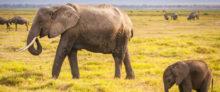 ABN AMRO sluit zich aan bij Illegal Wildlife Trade Financial Taskforce