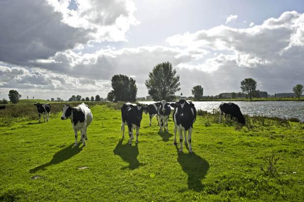 Voedselindustrie ondervertegenwoordigd in duurzame beleggingsfondsen