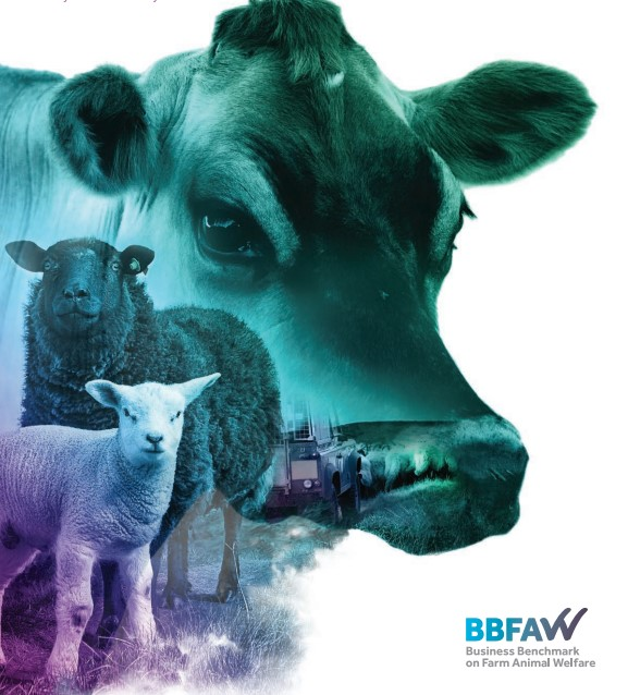 ACTIAM and KBI Global Investors join the BBFAW global investor collaboration in farm animal welfare