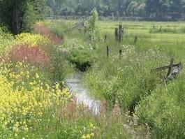 DNB en PBL: Biodiversiteitsverlies leidt tot financiële risico's