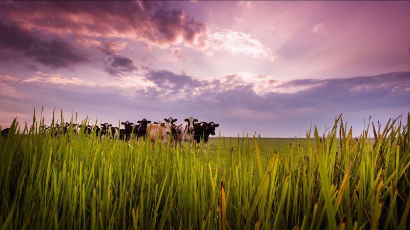 Investeer in de Biologische zuivelproducten van Weerribben Zuivel