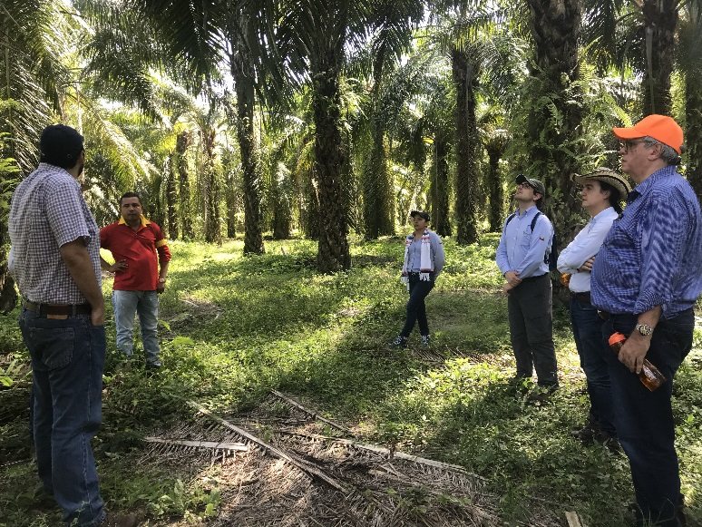 Fedepalma and IDH sign €1.2 million co-financing agreement for sustainable palm oil in Colombia