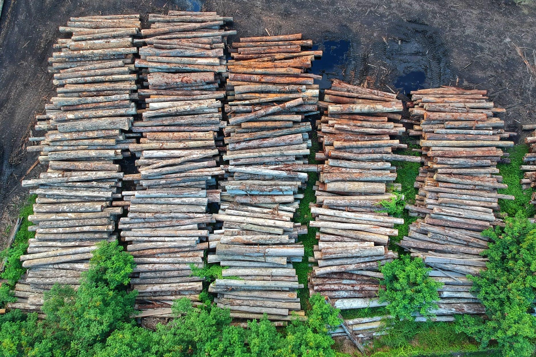 ACTIAM lanceert engagementprogramma in de strijd tegen ontbossing