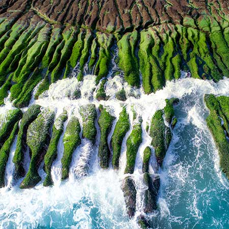Lombard Odier launches Natural Capital strategy
