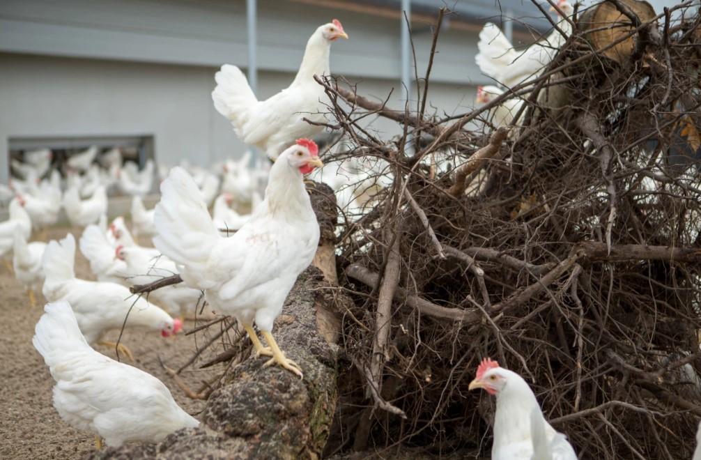 Brightlands Agrifood Fund verschaft groeikapitaal aan Kipster voor internationale doorbraak